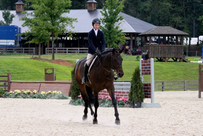 Cartaire, horse for sale; first year green for sale; jr hunter located in canton georgia